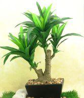 Importwala Green Polyester, Plastic and Ceramic Croton Bonsai Pot