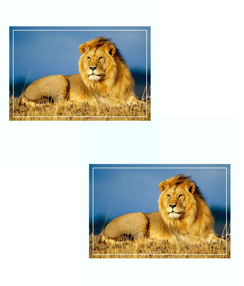 Printinggali Brown And Blue Babbar Sher - Lion Poster Buy 1