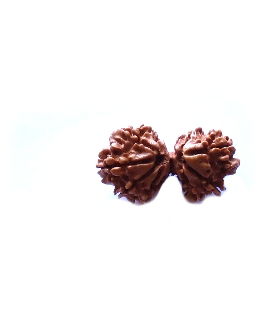 Navkaar Creation Natural 10 Mukhi Gauri Shankar Nepal Rudraksha - 30mm