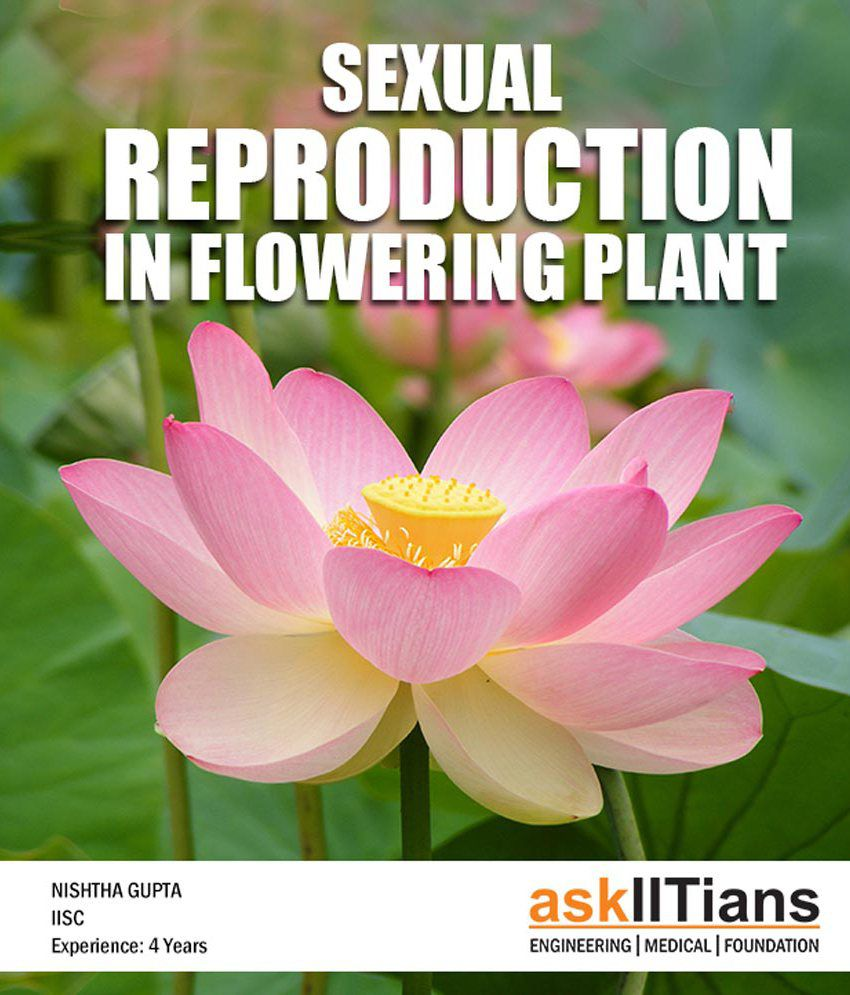 Complete sexual reproduction in flowering plant online course for complete sexual reproduction in flowering plant online course for aipmtaiimsclass 12 board izmirmasajfo Gallery