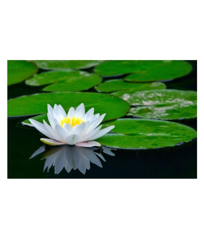 Sa heli lotus flower seeds buy sa heli lotus flower seeds online at sa heli lotus flower seeds mightylinksfo