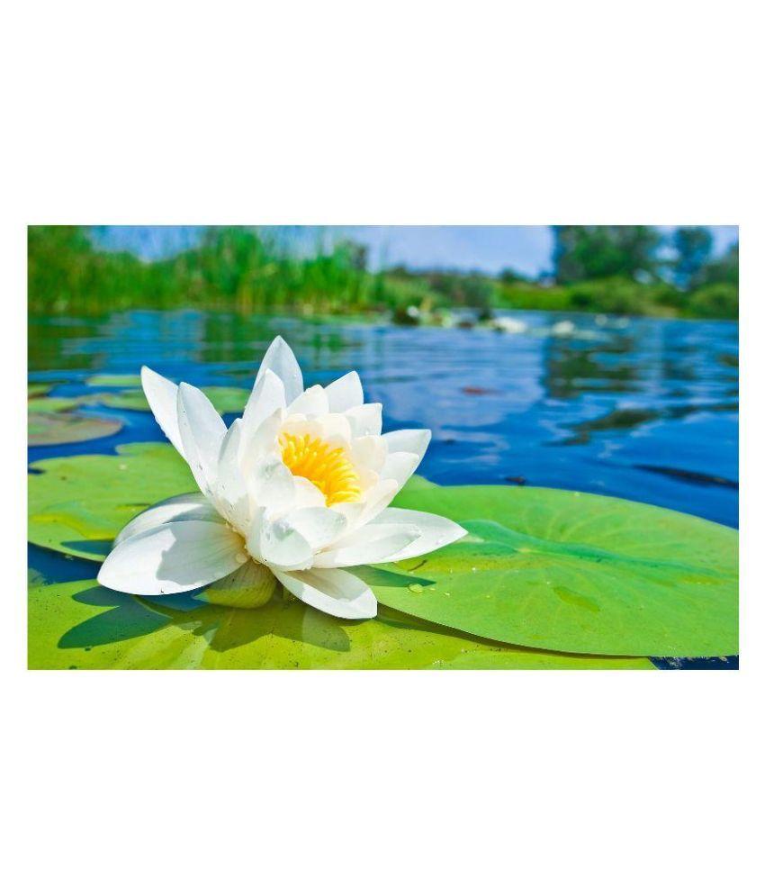 Sa Heli Lotus Flower Seeds Buy Sa Heli Lotus Flower Seeds Online At
