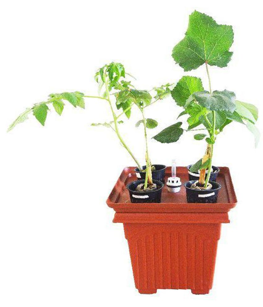 GZ green GZ Green and Brown Hydroponic Combo Planter with Water Level Indicator