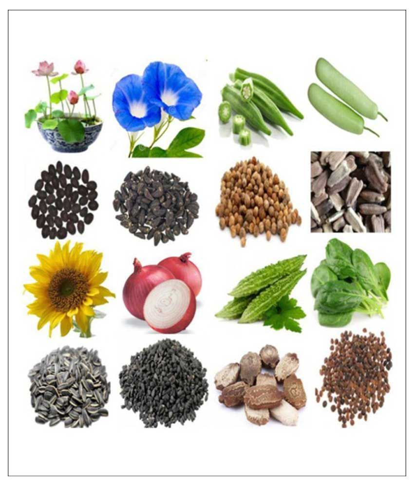 Alkarty 8 Flowers And Vegetables Seeds Price In India Buy Alkarty