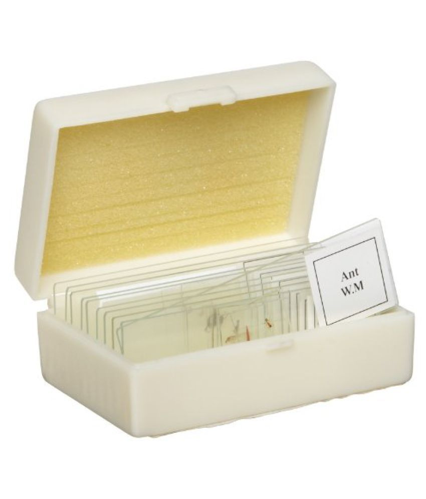 American Educational 10 Piece Glass Prepared Microscope Slide Insect Set