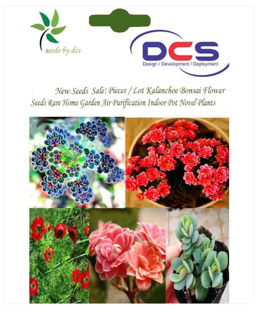 Dcs lot kalanchoe flower seeds buy dcs lot kalanchoe flower seeds dcs lot kalanchoe flower seeds izmirmasajfo