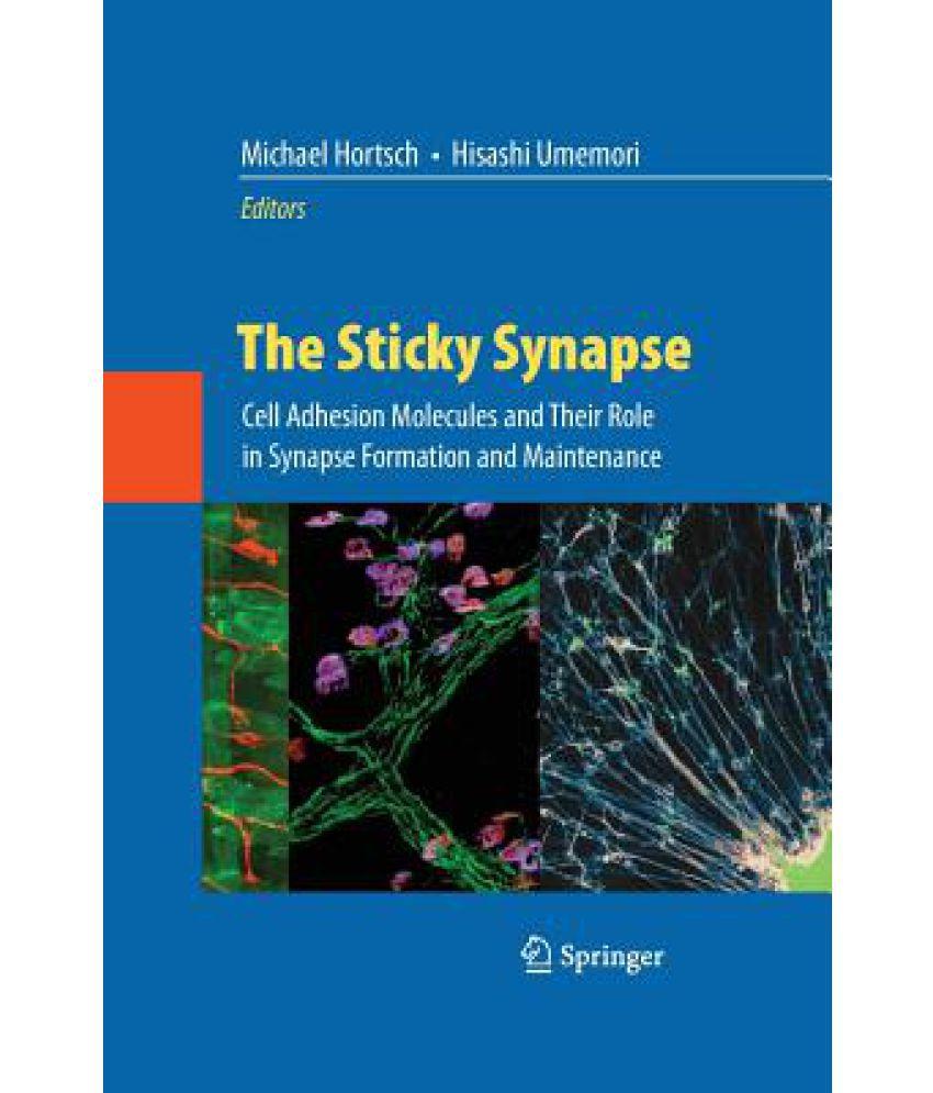 The Sticky Synapse
