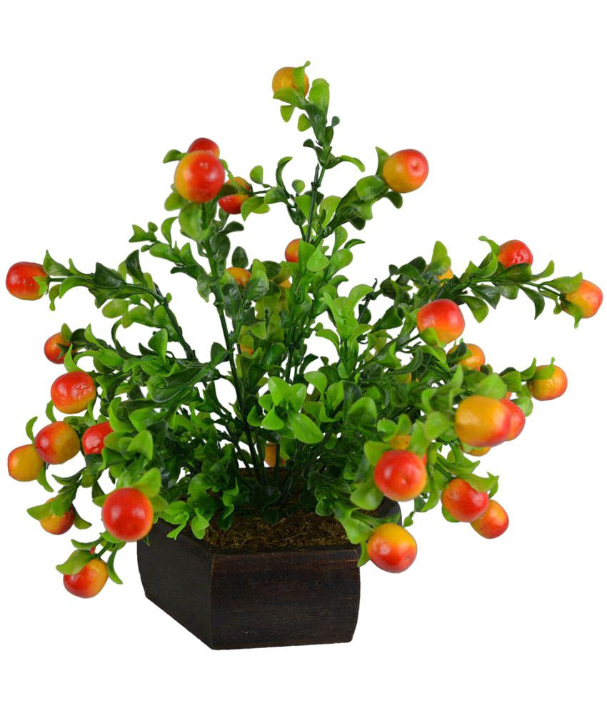 The Fancy Mart Bonsai Fruit tree 2 bunch wd hexa pot Multicolour Greens With Pot Plastic