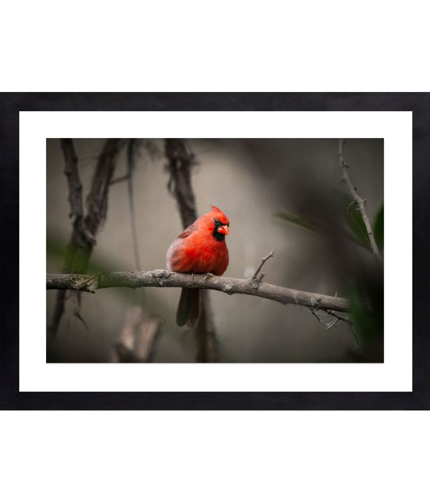Craftsfest Amazing photography of parrot Canvas Painting With Frame Single Piece