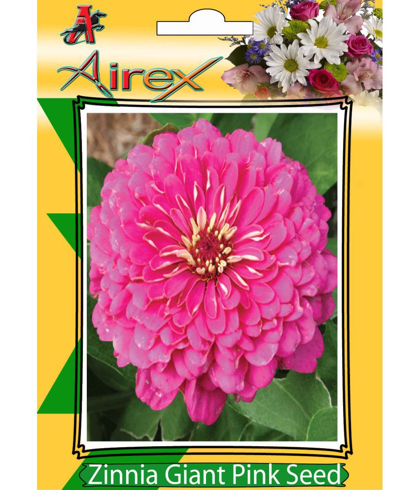 Airex Zinnia Giant Pink Summer Flower Seeds Buy Airex Zinnia