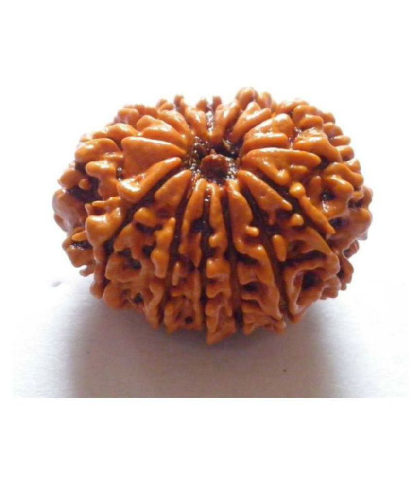 Certified Best Quality Nepal 13 Face Rudraksha