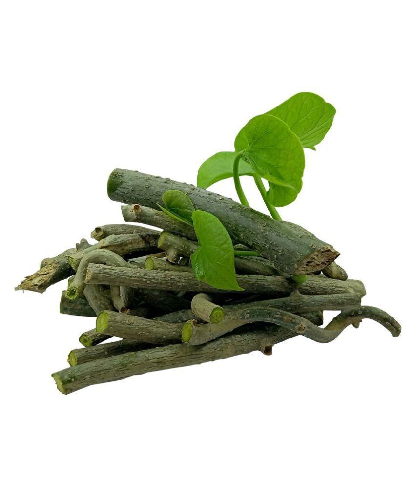 Tigma Giloy/Guchcha/Guduchi /Amrta/ गुडूची/GiloySabut/Geeloh/TinosporaCordifolia NeemGiloy/Plant/ Stems 27