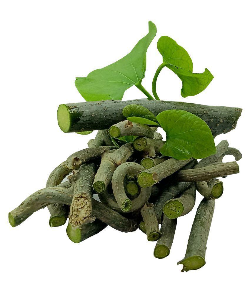 Tigma Giloy/Guchcha/Guduchi /Amrta/300 GM/GiloySabut/Geeloh/TinosporaCordifolia NeemGiloy/Plant/ Stems 26
