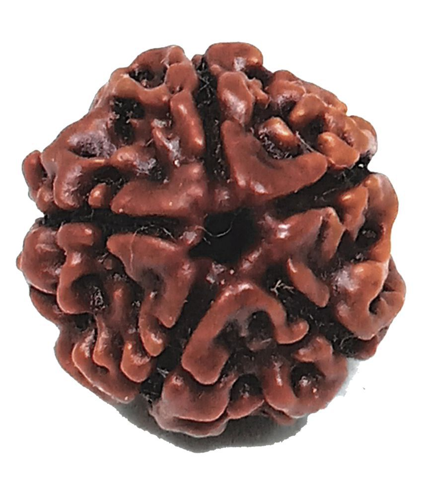Unicop 100 % Lab Certified Original And Natural Java Indonesian Religious  5 Mukhi Rudraksha For Man And Women Of  Lord Krishna For Get Rid Of All Problems