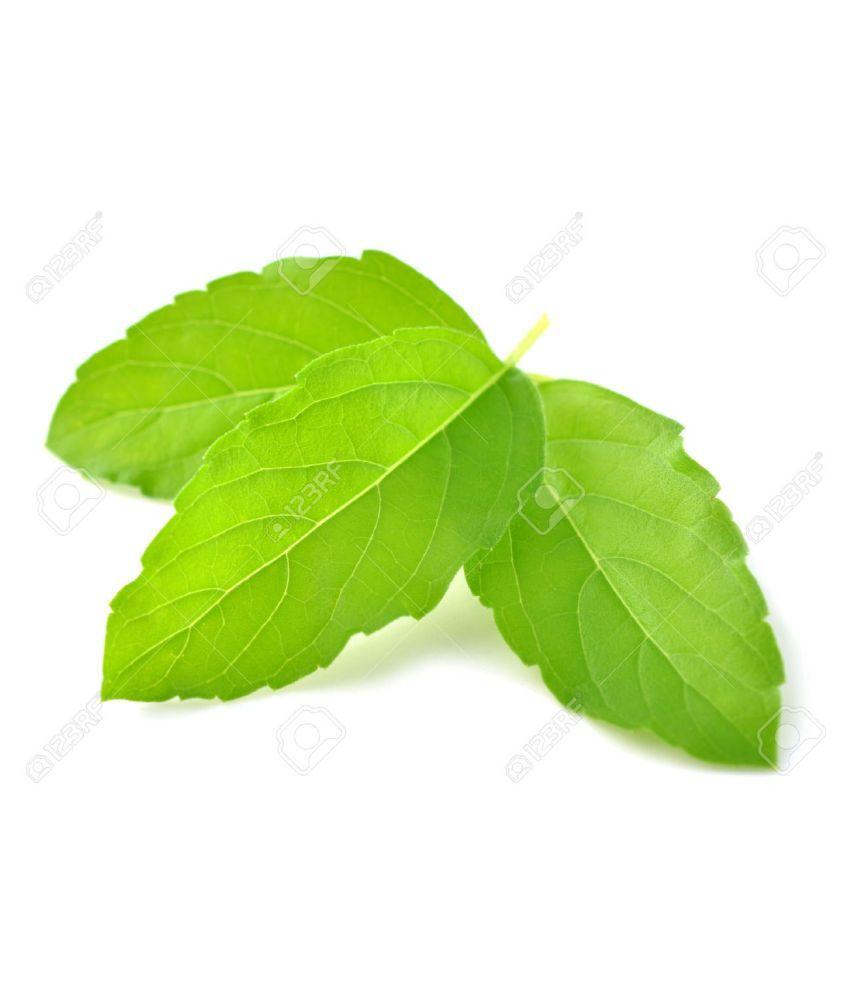 Urancia® Tulsi Leaves Basil Ocimum Sanctum Tulsi Patta 100g
