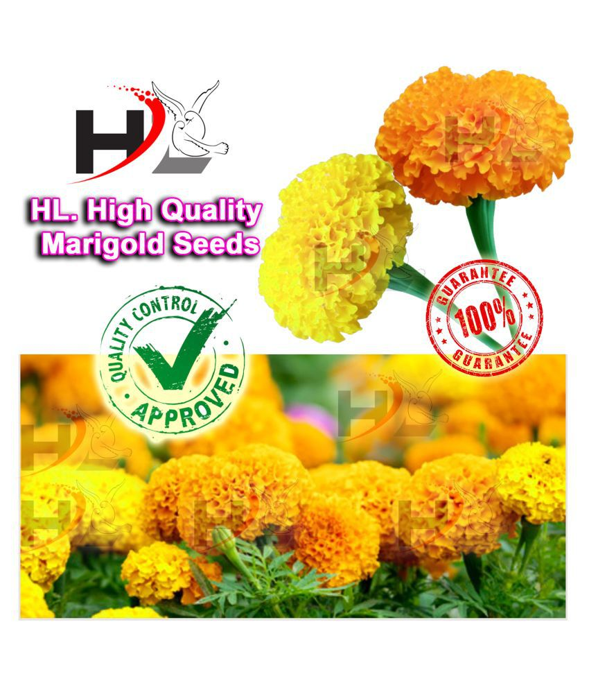 HL. High Quality MIX Marigold Seed (FREE PLANTS/FLOWER GROWING FOOD) 100% working / African Marigold Seeds