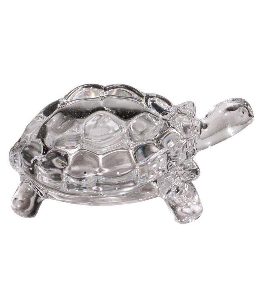 DIVYAM Tortoise
